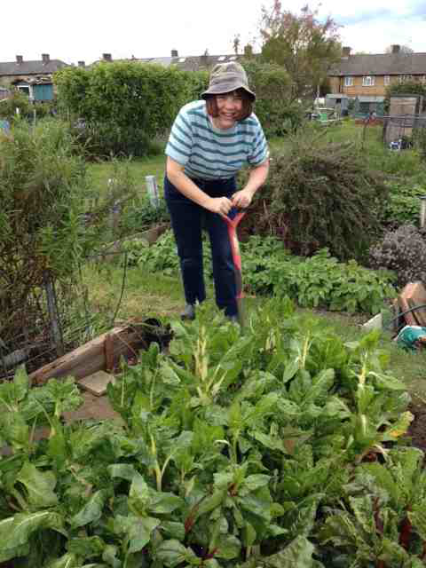 Working the Allotment