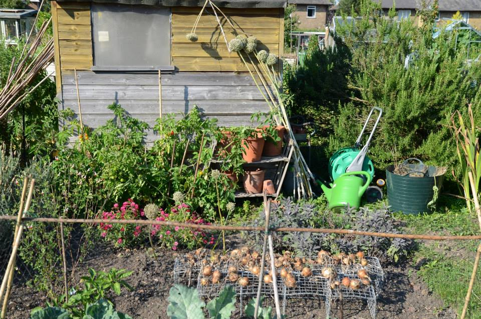 allotment-36