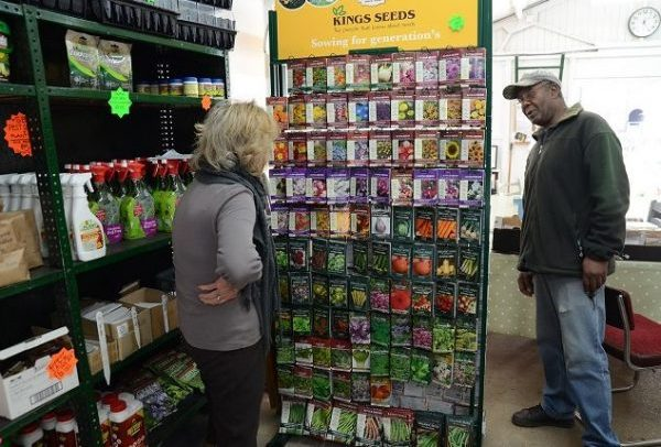 A great selection of seeds